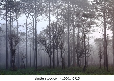 silhouette of multiple layers tropical rain forest forest covered by misty vapor morning fog. Dreamy daybreak in a beautiful plain with row of trees in natural park, Slang Luang, Thailand.