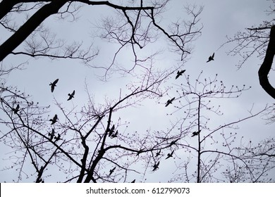 Silhouette of naked trees and flying doves.