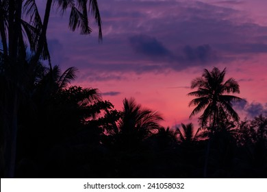 silhouette nature view with pink sky