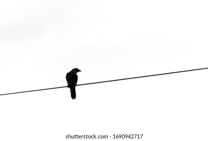 Silhouette of a Noisy Miner bird perched on an electrical cable