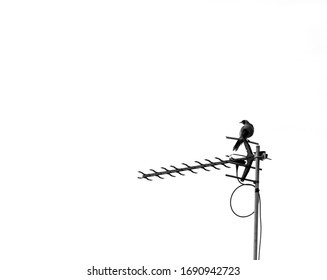 Silhouette of a Noisy Miner bird perched on a TV antenna