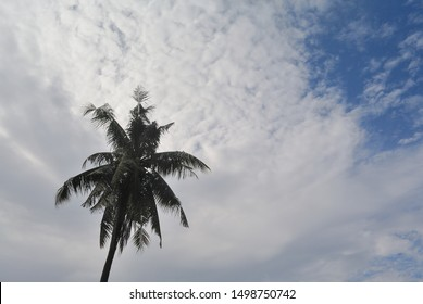 Silhouette o coconut tree with clouds in blue sky background