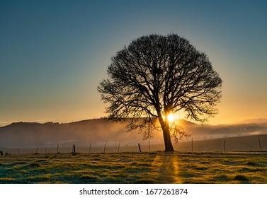 Silhouette of an oak tree at sunrise with sun rays streaming through tree, near Jefferson, Oregon