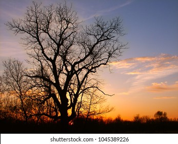 The silhouette of an old oak tree against a blazing Illinois sunset