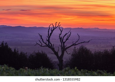 Silhouette of old tree on farming field against scenic countryside at twilight. Shropshire in United Kingdom