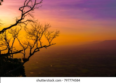 silhouette of the old tree with  red sky sunset background in the evening.