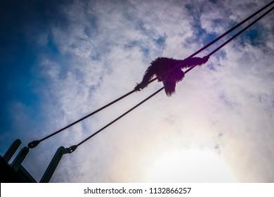 silhouette of orangutan climbing in the sun