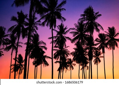 Silhouette palm or coconut trees in exotic tropical Krabi beach at dusk with colorful twilight sky, Thailand. Summer travel background. Holiday vacation concept.