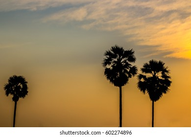 Silhouette of palm with golden sunset sky