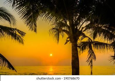 Silhouette palm sunset