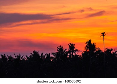 Silhouette of palm tree against orange sky