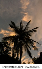 Silhouette of a palm tree during sunrise.