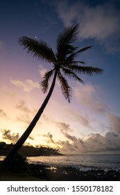 Silhouette of a palm tree in the early morning with colorful sky in the background. Sunrise or sunset. Shot in Poipu, Kauai, Hawaii USA.