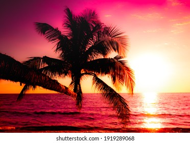 Silhouette of palm tree on the beach during sunset of beautiful a tropical beach on pink sky background
