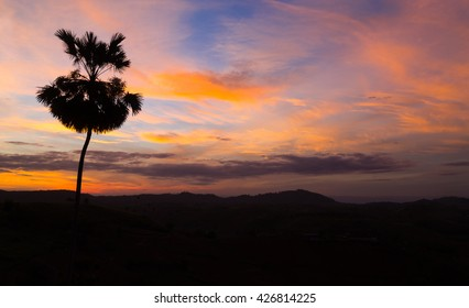 Silhouette palm tree on sunrise with colorful twilight sky on the mountain.