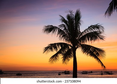 silhouette of palm tree on sunset tropical beach