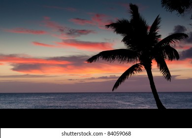 Silhouette of Palm Tree on Sunset Background - from North Shore of Hawaii