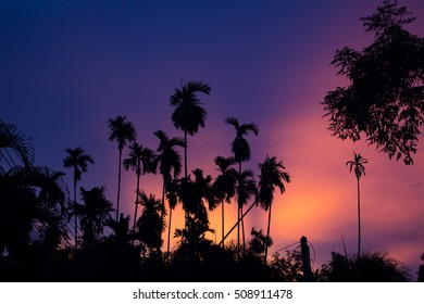 Silhouette Palm Tree Outdoors Concept, in the twilight.