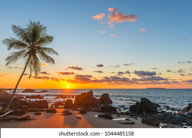 Silhouette of a palm tree and a sand beach inside Corcovado National Park with a view over the Pacific Ocean at sunset, Osa Peninsula, Costa Rica, Central America.