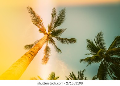 Silhouette palm tree with sun flare - vintage filter effect