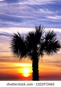 Silhouette of a palm tree at sunrise.
