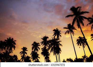 Silhouette of palm tree at sunset with color the sky background.