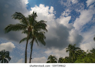 Silhouette palm trees against cloudy sky.