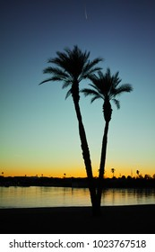 silhouette of palm trees during sunset on a beach