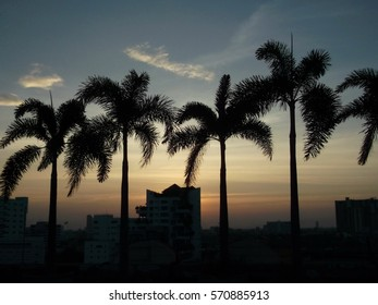 Silhouette of palm trees in front of evening sky background.
