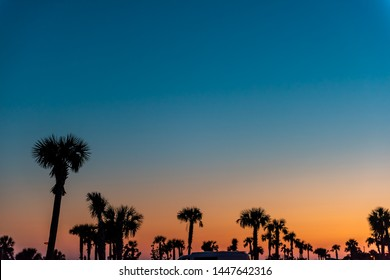 Silhouette of palm trees leaves against sky in Siesta Key, Sarasota, Florida with orange blue sky in beach parking lot
