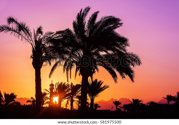 silhouette of palm trees, mosque at sunset.
