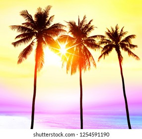 silhouette of palm trees on beach in light at sunset, paradise for travelers