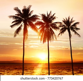 silhouette of palm trees on beach in light at sunset
