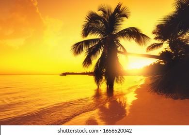 Silhouette of palm trees on a tropical island beach, sunrise shot