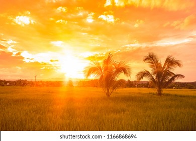 Silhouette of palm trees in rice field at sunset, natural landscape with colorful sky and clouds