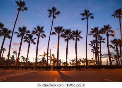 Silhouette of Palm Trees at Sunrise. Balboa Pier on January 24, 2017 at Newport Beach, California