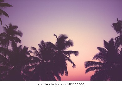 Silhouette of palm trees at sunrise with vintage filter, Instagram look