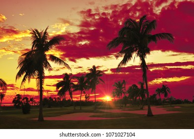 Silhouette palm trees at sunset.