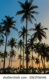 Silhouette of palm trees sunset vertical background.