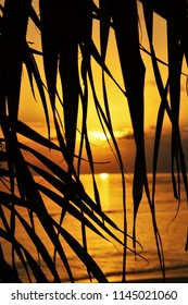 Silhouette of palm trees at tropical sunset