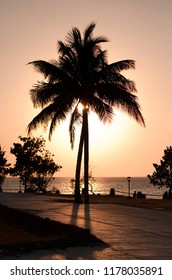 Silhouette of palmtree at sunset with Caribbean Sea in the background. Contre-jour shot.