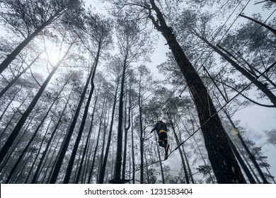 Silhouette of people crossing the canopy walk between pine trees during foggy weather at Puncak Lawang, Padang, Indonesia.