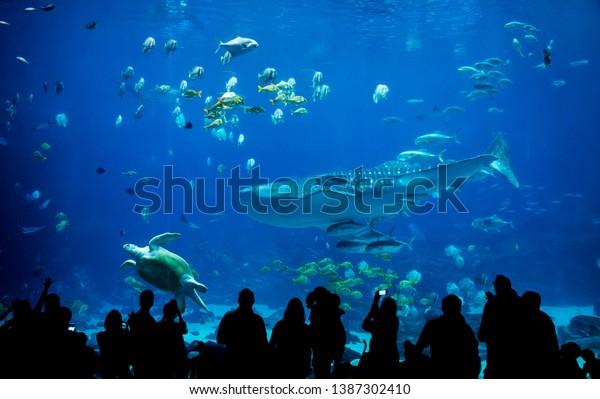 silhouette people in great aquarium