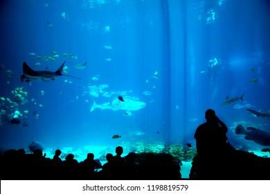 Silhouette people looking fish