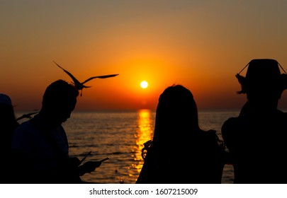 silhouette people taking seagull photo with sunset at Resort, Thailand. decoration image contain certain grain  noise and soft focus.