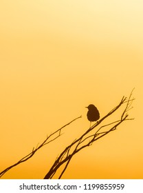 Silhouette of a perching bird in Israeli desert. Can be used as a background image or cover image