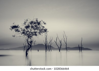 Silhouette of The perennial trees died in the water at the reservoir ,long exposure sunset in Thailand,Black and White color,Blue mono tone