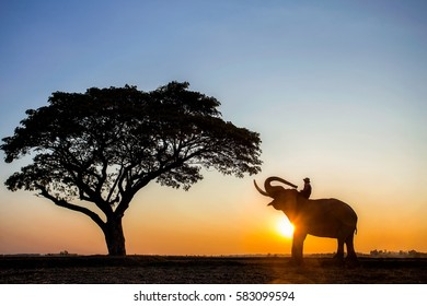 The silhouette of a person riding an elephant in a field near trees at the sunset time