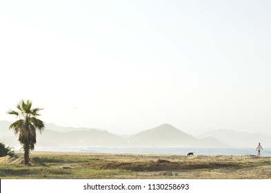 silhouette of person walking their pet on beach