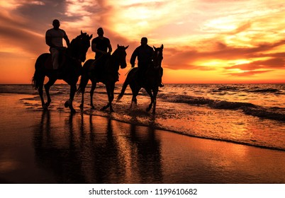 A Silhouette photo of Horsemen riding horses on the beach, Gaza - Palestine.
